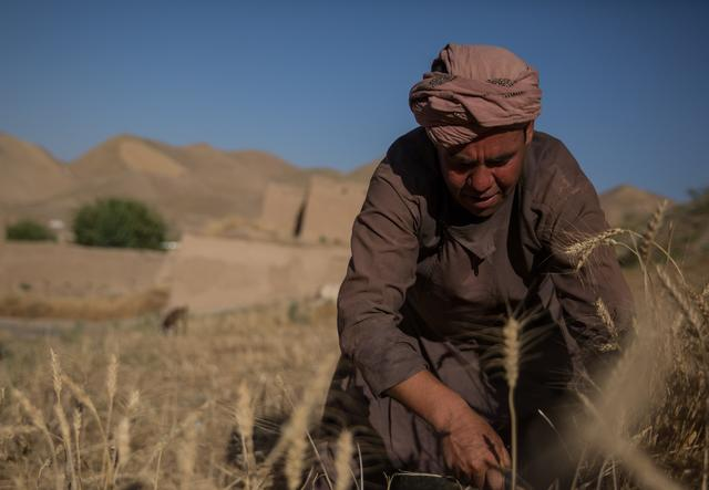A farmer on his field