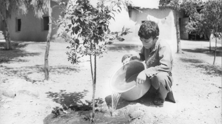 A boy watering a small tree